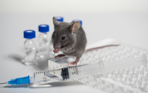 OP-ED: Animal Testing